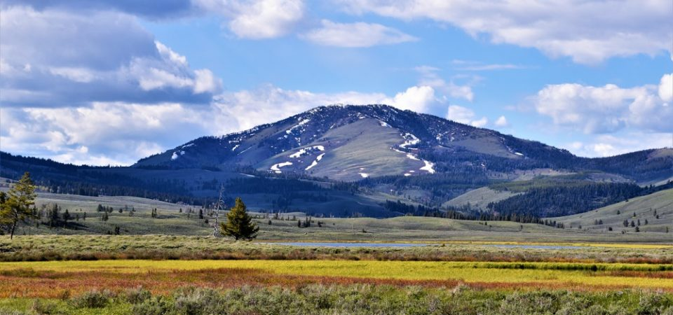 10 Insider Tips for Visiting Yellowstone National Park