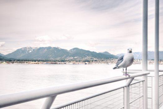 Cutie Bird In Afternoon