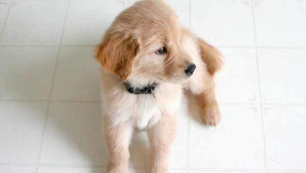 The 10 Most Popular Dog Breeds